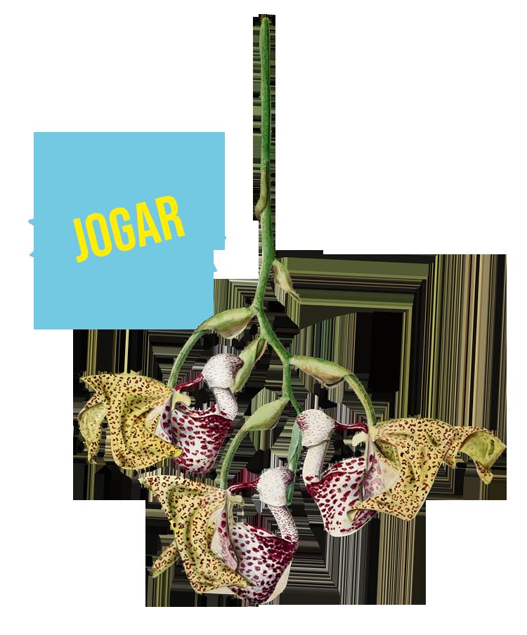 Darwin e as Orquídeas