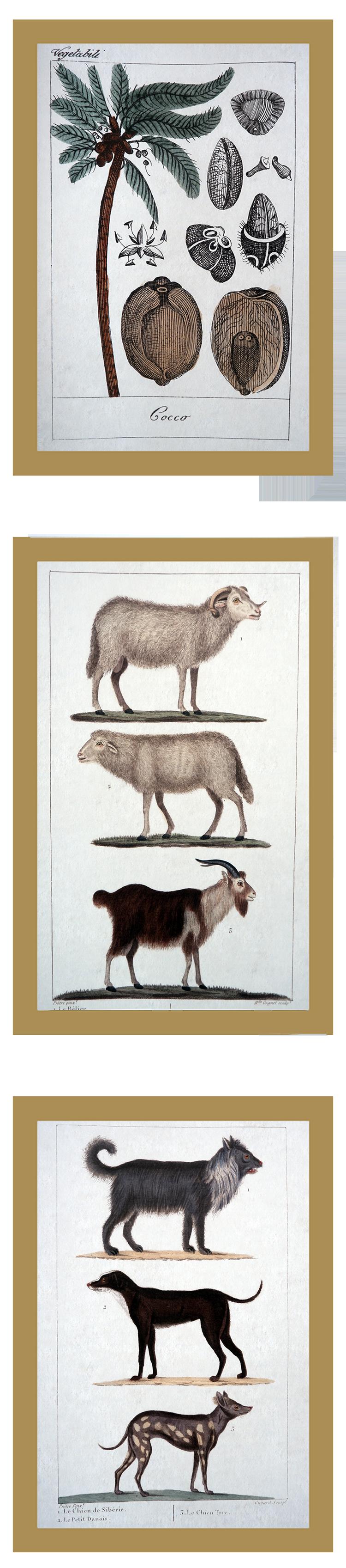 3 ilustrações de História Natural